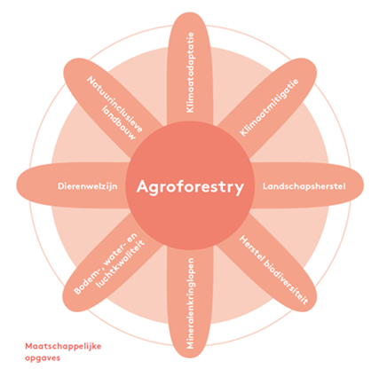 Infographic agroforestry